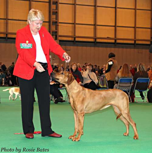Tiffany - 1st in Limit Bitch at Crufts 2012